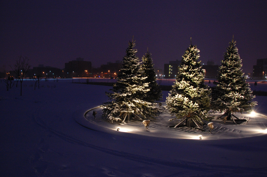 Christmas Trees With Snow On Them