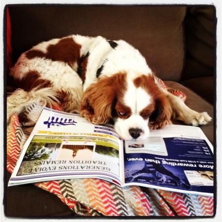Dog_reading_TPS