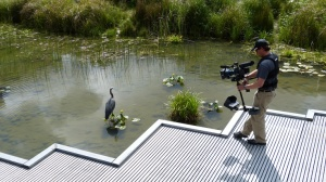 Videographer, Mark Stitzer focuses on a heron in Tanner Springs Park, Portland.